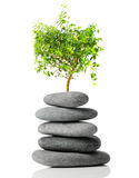 Japanse bonsai Royalty-vrije Stock Afbeelding