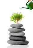 Japanse bonsai Royalty-vrije Stock Afbeeldingen