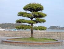 Japanse boom stock foto's