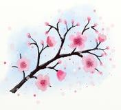 Japanse de bloesemwaterverf van de kersenboom royalty-vrije illustratie