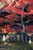 Japanse esdoorn tijdens daling voor tempel Royalty-vrije Stock Afbeelding