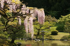 Japanse Garden Stock Image