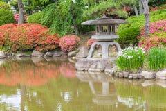 Japanse groene tuin Stock Afbeeldingen