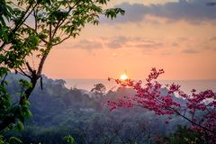 Japanse kers bij zonsondergang Royalty-vrije Stock Afbeeldingen
