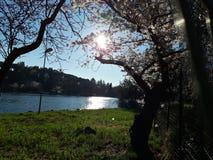 Japanse kersenbloesems in Rome, Eur weinig meer Zonnige de lentedag royalty-vrije stock afbeeldingen
