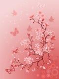 Japanse kersenboom Royalty-vrije Stock Foto's