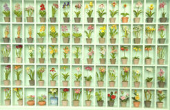 Japanse kleibloem Stock Foto