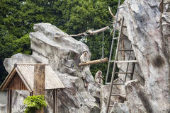 Japanse Macaque Royalty-vrije Stock Foto