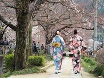 Japanse meisjes die met Kimono onder de boom van kersenbloesems lopen stock foto