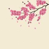 Japanse sakura De weelderige bloesem van de tak donkere roze kers stock illustratie