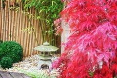 Japanse steenlantaarn en rode esdoornboom Stock Fotografie