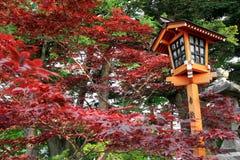 Japanse Stijllamp tijdens Autumn Season Stock Foto