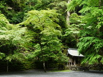 Japanse temple in the forest Royalty Free Stock Photo