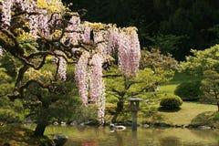 Japanse trädgård Fotografering för Bildbyråer