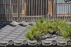 Japanse traditionele architectuur en pijnboomboom Stock Afbeelding