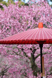Japanse traditionele rode paraplu Royalty-vrije Stock Fotografie