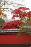 Japanse tuin in de botanische tuin van Leiden Stock Foto's