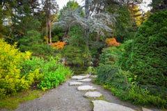 Japanse tuin in de herfst Royalty-vrije Stock Fotografie