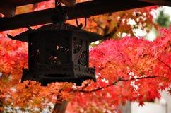 Japanse tuin in de Herfst, rode bladeren Kyoto Japan Stock Foto