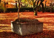 Japanse tuin in de Herfst, rode en gele bladeren Kyoto Japan Royalty-vrije Stock Afbeelding