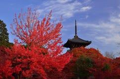 Japanse tuin in de herfst, rode esdoornbladeren Royalty-vrije Stock Afbeelding