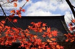 Japanse tuin in de herfst, rode esdoornbladeren Stock Afbeeldingen