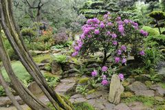 Japanse tuin in de zomer met steenweg Stock Fotografie