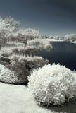 Japanse Tuin door het Water Stock Afbeeldingen