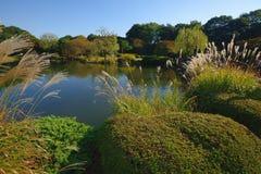 Japanse tuin en miscanthusstruiken Stock Afbeeldingen