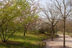 Japanse tuin, Hasselt, België Royalty-vrije Stock Foto's