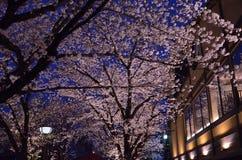 Japanse tuin in Kyoto, de nacht van de kersenbloesem Royalty-vrije Stock Foto's