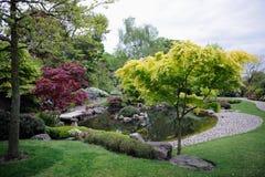 Japanse tuin, met esdoornbomen en vijver Royalty-vrije Stock Foto