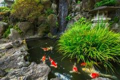 Japanse tuin met gouden vissen in Kamakura Royalty-vrije Stock Foto