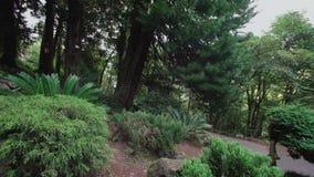 Japanse tuin met verscheidenheid die van naaldbomen op helling, sparren, varens groeien stock video