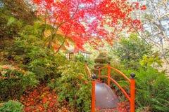 Japanse tuin met voetgangersbrug en gazebo in de Herfst Stock Afbeeldingen