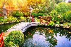 Japanse tuin met zwemmende koivissen in vijver Stock Foto