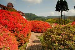 Japanse tuin op gebied Hakone Stock Afbeelding
