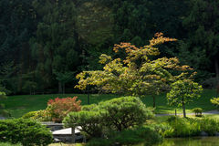 Japanse Tuin in Washington Park Arboretum, Seattle, Washington stock afbeelding