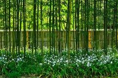 Japanse tuin, weg in bamboebosje Stock Fotografie