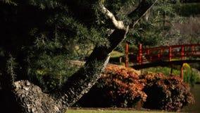 Japanse tuinen in Toowoomba stock videobeelden