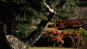 Japanse tuinen in Toowoomba stock video