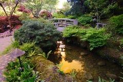 Japanse tuinvijver Stock Foto's