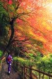 Japanse vrouw die met traditionele kimono in de herfst lopen royalty-vrije stock fotografie