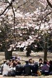 Japanse vrouwen die thee drinken onder kersenbloesem Stock Foto's
