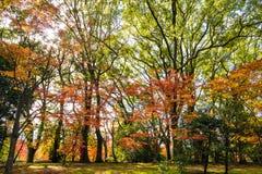 Japanse zentuin, de herfst Kyoto Stock Fotografie