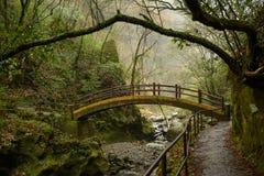 Japansk bro över i regnig skog Fotografering för Bildbyråer