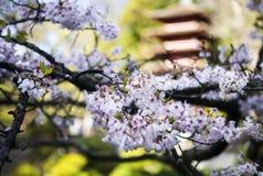 Japansk byggnad i trädgård Arkivbild