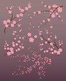 Japansk filial Arkivbild