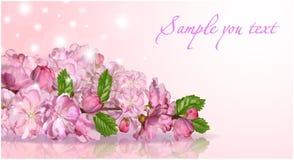 Japansk körsbärsröd blomning Arkivfoto