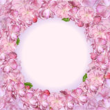 Japansk körsbärsröd blomning Royaltyfri Foto
